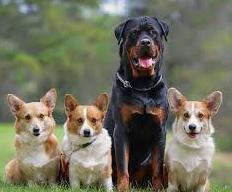certificado medico animales peligrosos
