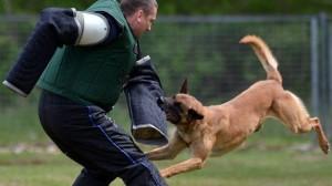 certificado médico perros potencialmente peligrosos